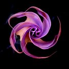 Electric Purple Spinning by Jennifer  Gaillard