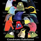 Gondwana Rainforest Birds of Australia - Raising funds for BirdLife Australia by Paula Peeters