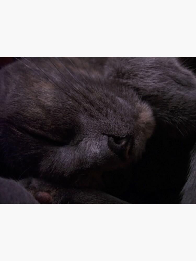 Sweet Feline Dreams... by CGafford