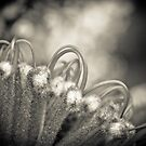 Banksia by Andrew Bradsworth