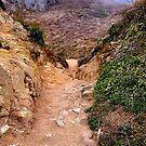Life's path ! by Nancy Richard