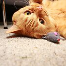 Brock The Kitty by Robert Drobek