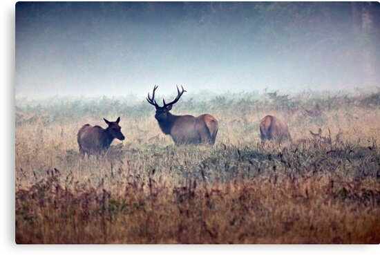 Misty Morning by Randall Ingalls
