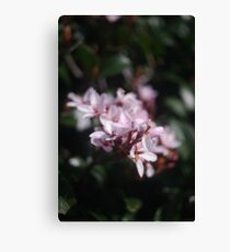 passionately pink Canvas Print