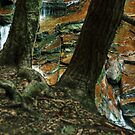Behind the Pines (Ganoga Falls) by Aaron Campbell