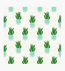 Snake Plant Pattern Photographic Print