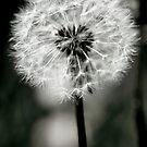 A Dark Heart - Gothic Dandelion by moonangelnay