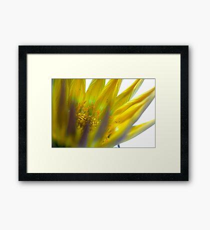 exploding flower Framed Print