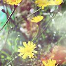 Enchantment - Lucid Dandelion Dreams by moonangelnay