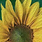 Sonnenblume Digital Art Painting von David Alexander Elder