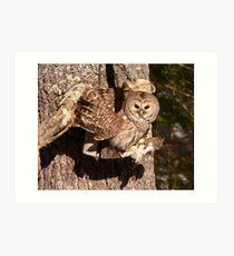 2009 02 Barred Owl  Art Print