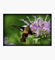 Hummingbird Moth Summer Photographic Print