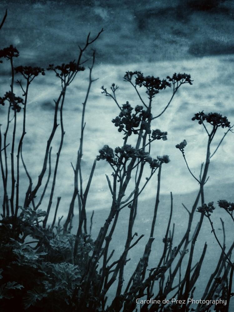 Midnight Dreams of the Sea by CarolinedP