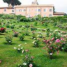 Rose garden in Rome in spring by revealedrome