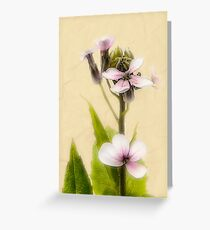 Vintage Flower Photograph on Aged Paper Greeting Card