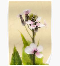 Vintage Flower Photograph on Aged Paper Poster