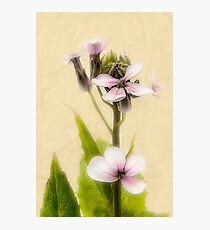 Vintage Flower Photograph on Aged Paper Photographic Print