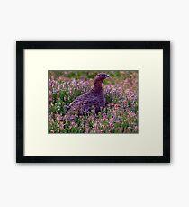 Grouse #3 Framed Print