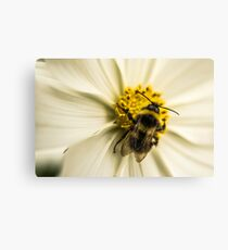 A Bee for effort Canvas Print