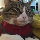Sqidward the cat in a sweater by TaylerMacneill