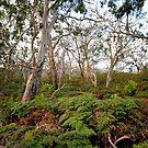 Cape Otway by Jason Hilsdon