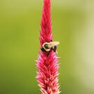 Bee & Nectar by vasu