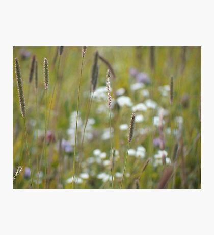 Summer grass 24 Photographic Print