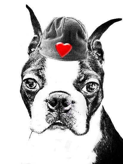 Boston Terrier - Valentines Day by Marcia Rubin