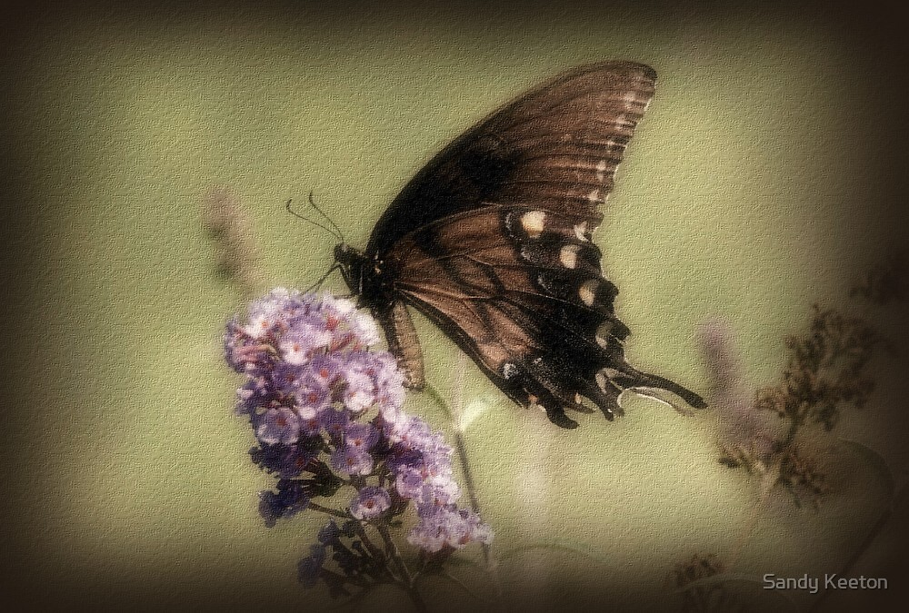 Brown and Beautiful by Sandy Keeton