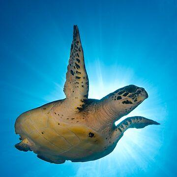 Sea Turtle by underwaterart