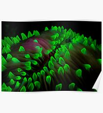 Coral fluorescence Poster