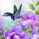 Süßer Kolibri von Morag Bates