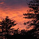 Sunrise from my home by Janie. D