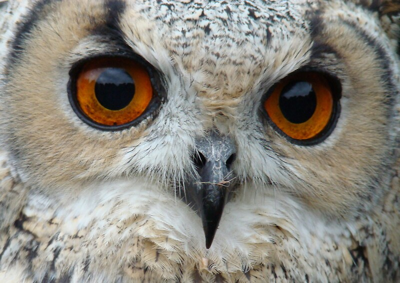 """eagle owl eyes"" by purpleminx 