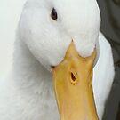 Quack! by purpleminx