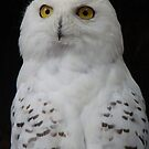 snowy owl by purpleminx
