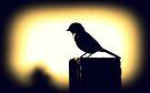 Bird by Joshua Greiner