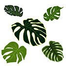 Monstera Leaves by Hannah Kaplan