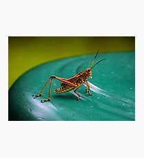 Grasshopper Relaxin Photographic Print