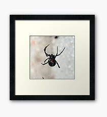 deadly web-weaver 2b Framed Print