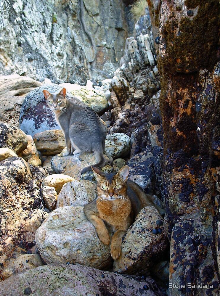 Cats on Rocks Two  by Stone Bandana