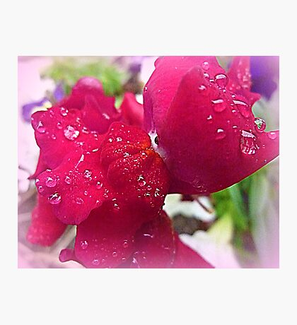 Bejewelled Snapdragon Photographic Print