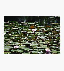 Lilly Pads Photographic Print