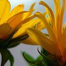 Blooms by JennD73