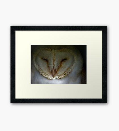 Barn Owl #1 Framed Print