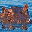 Hippopotamus (Hippopotamus amphibius) by Konstantinos Arvanitopoulos
