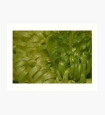 Green chrys Art Print