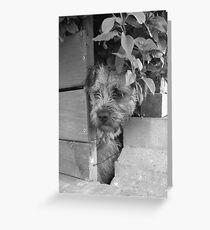 Manic Border Terrier Greeting Card