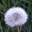 Make a wish by Billyd21c