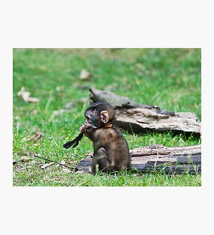 Barbary Monkeys,Primates, Small, young, babies, Animals,  Photographic Print